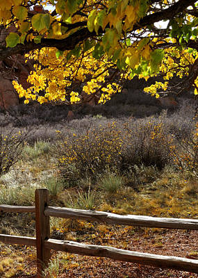 Jerry Sodorff Royalty-Free and Rights-Managed Images - Fall Canopy and Fence 12476 by Jerry Sodorff