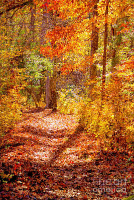Photograph - Fall Canopy In Eno State Park by Sandra Clark