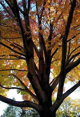 Photograph - Fall Canopy by Trent Mallett