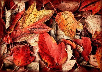 Photograph - Fall Carpet by Carolyn Derstine