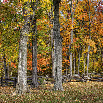 Art Print featuring the photograph Fall Color #1 by Wendell Thompson