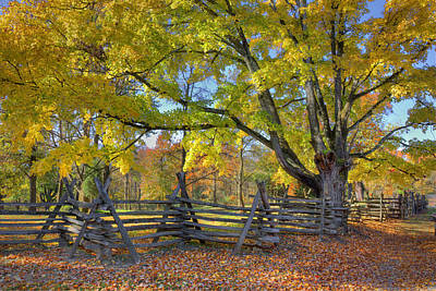 Fall Color #2 Art Print by Wendell Thompson