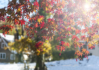 Photograph - Fall Color And Early Snow I by Marianne Campolongo