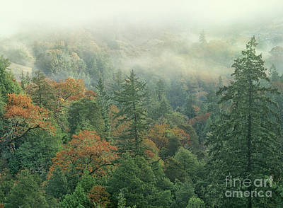Photograph - Fall Color And Fog Near Garberville California by Dave Welling