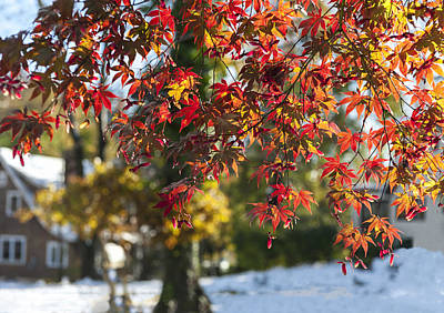 Photograph - Fall Color And Snow by Marianne Campolongo