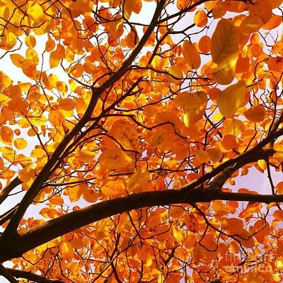 Photograph - Autumn Brilliance Looking Skyward by Angela Rath
