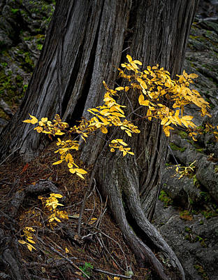 Photograph - Fall Color At A Small Scale by Robert Woodward