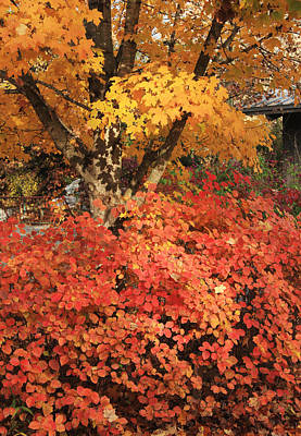 Photograph - Fall Color At Ijams Nature Center by Melinda Fawver