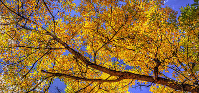 Jerry Sodorff Royalty-Free and Rights-Managed Images - Fall Color Canopy 12161 by Jerry Sodorff