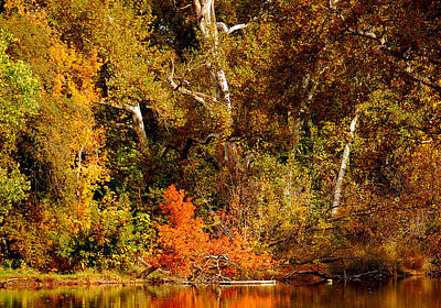 Photograph - Fall Color Creekside by Holly Blunkall