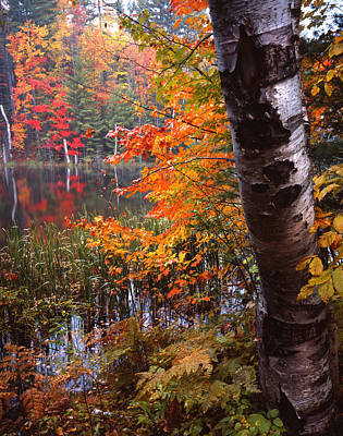 Photograph - Fall Color In Upper Michigan by Ray Mathis