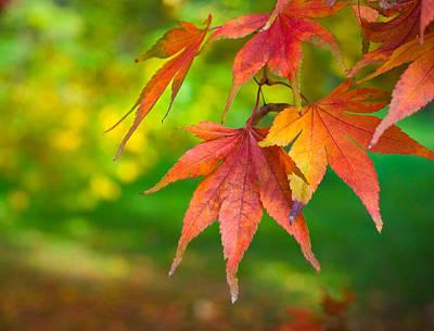 Fall Color Art Print by Jeff Klingler