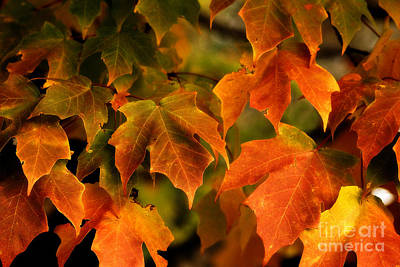 Photograph - Fall Color by Melissa Petrey
