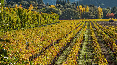 Fall Color Napa Style Art Print by Bill Gallagher