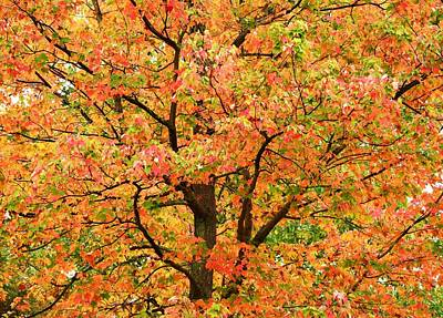 Fall Color Palette Art Print by Judy Genovese
