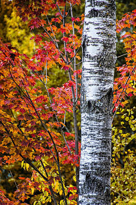 Photograph - Fall Color by Peg Runyan