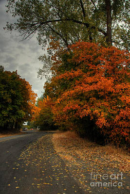 Photograph - Fall Color by Sam Rosen