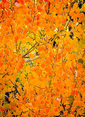 Photograph - Fall Color Screen by Joe Doherty