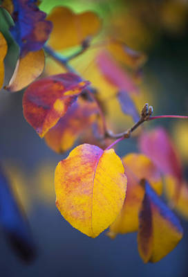 Photograph - Fall Color by Stephen Anderson