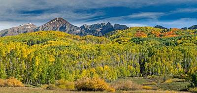 Photograph - Fall Colorado Aspens Showing Their Colors by Willie Harper