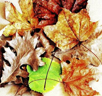 Elm Digital Art - Fall Colored Leaves by Marsha Heiken