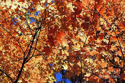 Digital Art - Fall Colors 2 by Eva Kaufman
