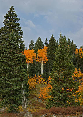 Photograph - Fall Colors 2 Greeting Card by Ernie Echols