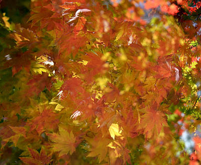 Photograph - Fall Colors-2 by Minartesia