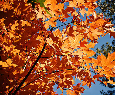 Photograph - Fall Colors 2 by Shane Kelly