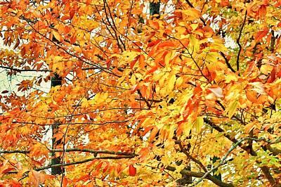 Fall Photograph - Fall Colors 2014-13 by Srinivasan Venkatarajan