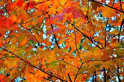 Nirvana - Fall Colors 2014-5 by Srinivasan Venkatarajan