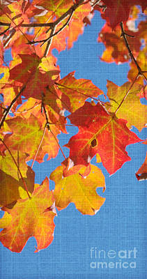 Photograph - Fall Colors 3 by Rima Biswas