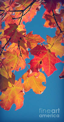 Photograph - Fall Colors 4 by Rima Biswas
