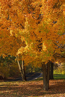 Curve Photograph - Fall Colors by Adam Romanowicz