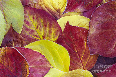 Photograph - Fall Colors by Alan L Graham