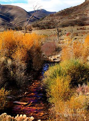 Photograph - Fall Colors Along A  Desert Stream by Robert Bales