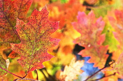 Art Print featuring the photograph Fall Colors by Arkady Kunysz