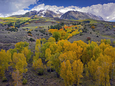 Fall Colors At Chair Mountain Colorado Art Print by Tim Fitzharris
