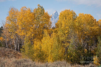 Photograph - Fall Colors At Grand Teton National Park by Fred Stearns