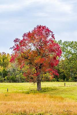 Autumn Photograph - Fall Colors by Barry Jones