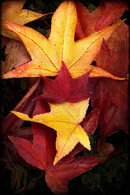 Photograph - Fall Colors by Bobbi Feasel