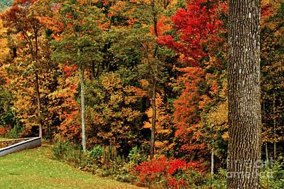 Photograph - Fall Colors by Debra Crank