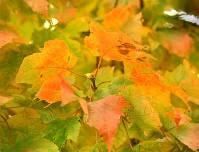 Photograph - Fall Colors by Donald Torgerson