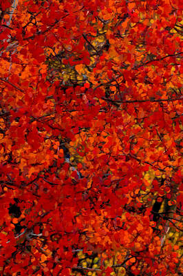 Digital Art - Fall Colors Dp 3 by Ernie Echols