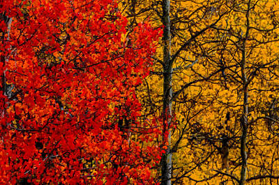 Digital Art - Fall Colors Dp by Ernie Echols