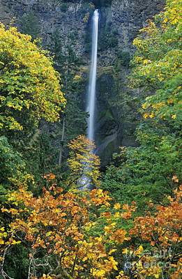 Photograph - Fall Colors Frame Multnomah Falls Columbia River Gorge Oregon by Dave Welling