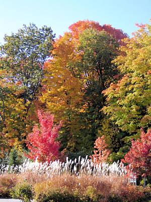 Fall Colors Art Print by Gaetano Salerno