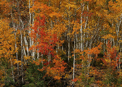 Photograph - Fall Colors Greeting Card by Ernie Echols