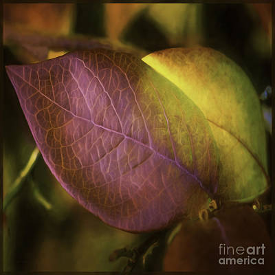Photograph - Fall Colors 2 by Jean OKeeffe Macro Abundance Art