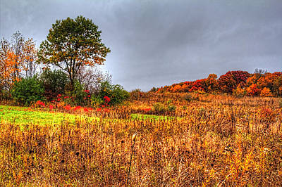 Photograph - Fall Colors II by Roger Passman
